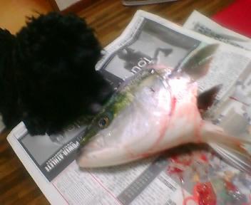 魚の頭に。。。。♪_f0096569_19281021.jpg