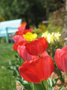 チューリップの花が~_e0050322_8295893.jpg