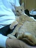 野良猫⇒地域猫  その5_c0006826_17121496.jpg