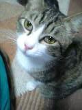 野良猫⇒地域猫  その5_c0006826_17252911.jpg