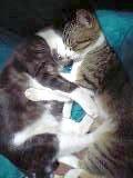 野良猫⇒地域猫  その5_c0006826_17285853.jpg