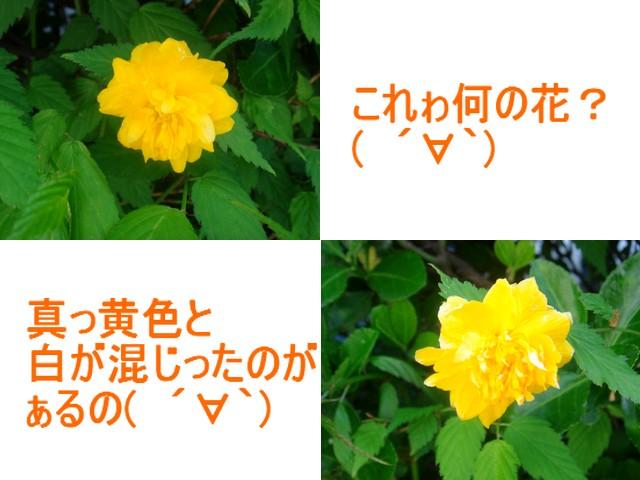 b0078073_15522948.jpg