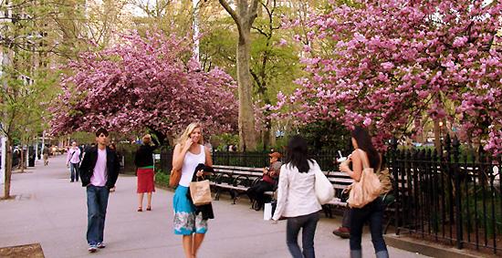 春の到来と公園の様子-Madison Square Park_b0007805_6532588.jpg