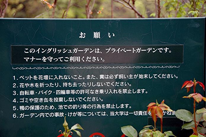 イングリッシュ ガーデン_a0042310_1957062.jpg