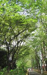 緑陰行路(りょくいんこうろ)_f0038336_2029713.jpg