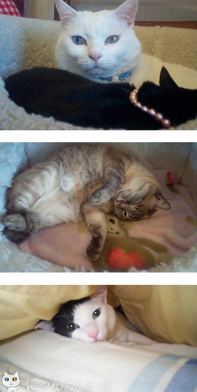 猫族的休暇日_e0031853_12212873.jpg