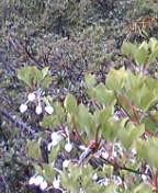 キャベツはいつでも収穫可能(2006・4・22)_c0014967_056517.jpg