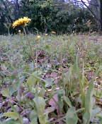 キャベツはいつでも収穫可能(2006・4・22)_c0014967_1544999.jpg