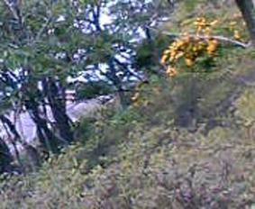 キャベツはいつでも収穫可能(2006・4・22)_c0014967_157365.jpg