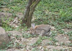 公園にウサギ_c0070377_21281929.jpg