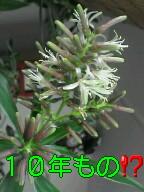 f0108581_10222899.jpg