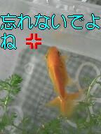 f0108581_10455.jpg