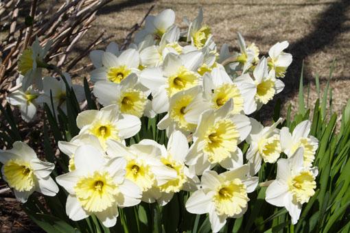 花の季節が始まる_e0054299_1733272.jpg