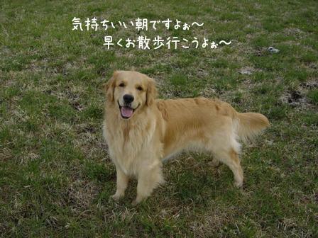 爽やかな春風の朝_f0064906_12463872.jpg