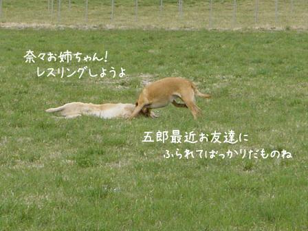 爽やかな春風の朝_f0064906_1246516.jpg