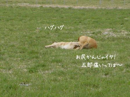爽やかな春風の朝_f0064906_1247845.jpg