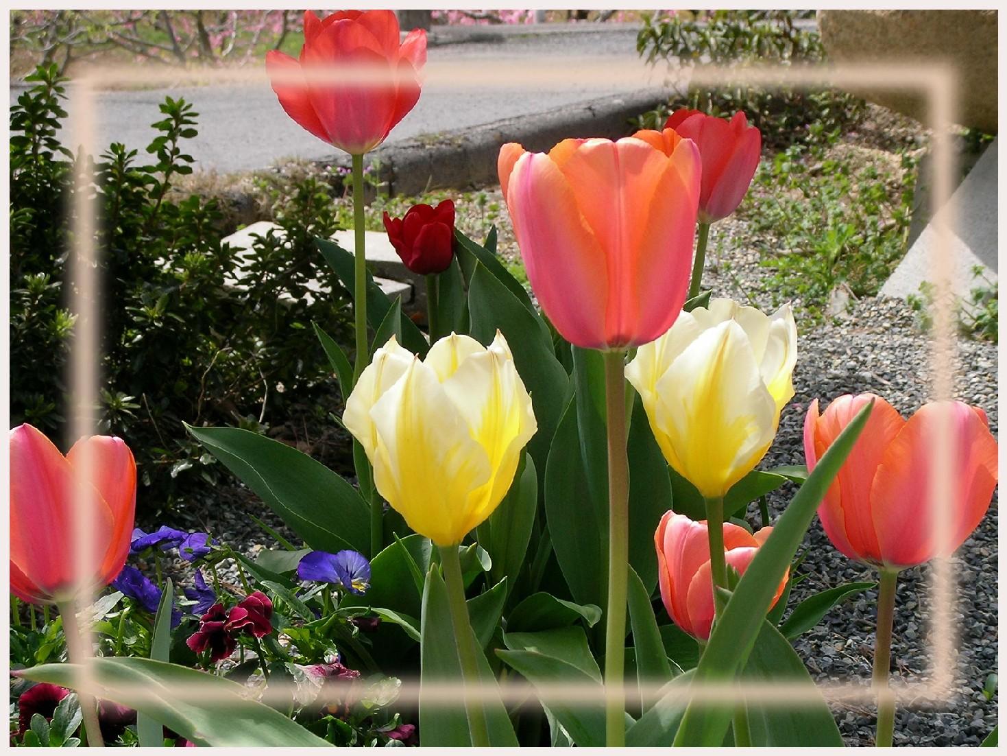 彩り豊かな春。_f0045132_13184617.jpg