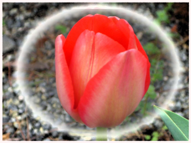 彩り豊かな春。_f0045132_13192297.jpg