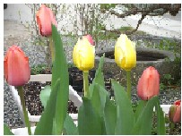 彩り豊かな春。_f0045132_13234146.jpg