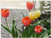 彩り豊かな春。_f0045132_13235075.jpg