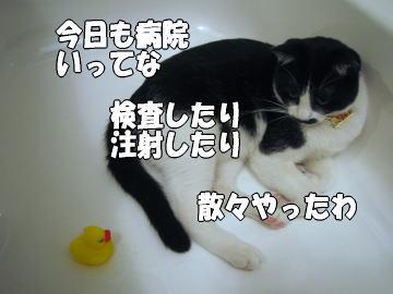 b0041182_731579.jpg