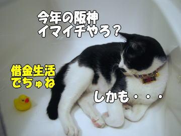 b0041182_7321461.jpg
