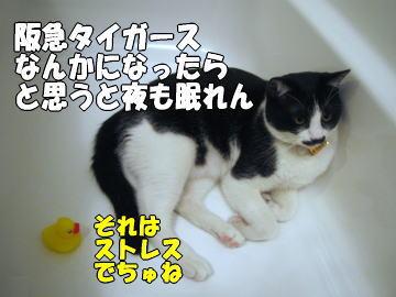 b0041182_7322398.jpg