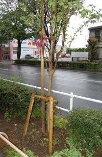 ビバ東京都_a0019819_1250579.jpg