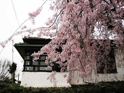 春の京都ツアー 第四日目(1)「櫻の園」_f0041351_22473954.jpg