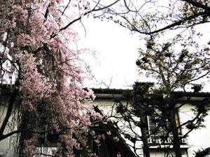 春の京都ツアー 第四日目(1)「櫻の園」_f0041351_2372874.jpg