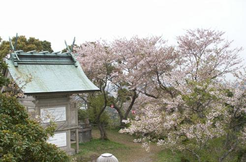 4月9日のお花見_b0083267_22143100.jpg