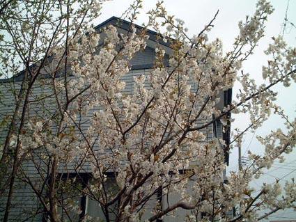 庭の花_f0019498_19553863.jpg