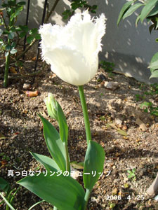 f0057006_12334338.jpg