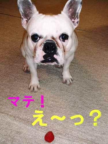 f0090117_20115837.jpg