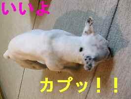 f0090117_20121776.jpg