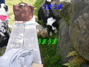 d0013645_1972713.jpg