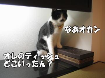 b0041182_23224625.jpg