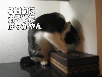 b0041182_2323211.jpg