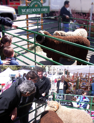 羊もいます_b0007805_10385812.jpg