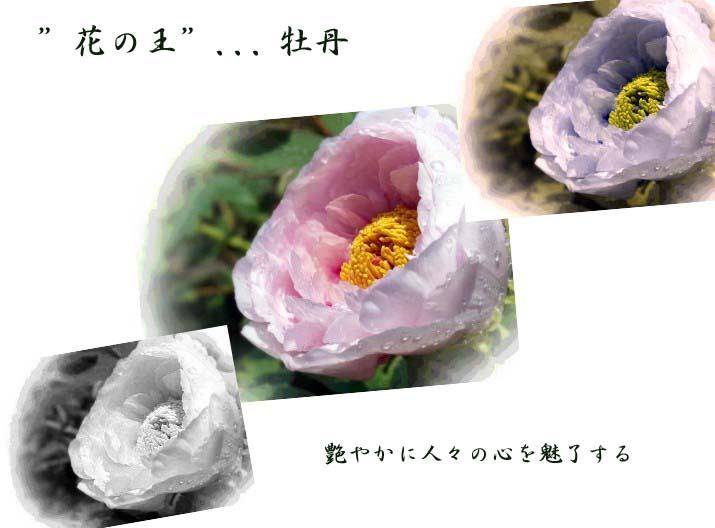 f0103534_18524869.jpg