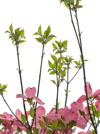 今を盛りと咲ききそう 2006/4/26-wed_f0031535_20302179.jpg
