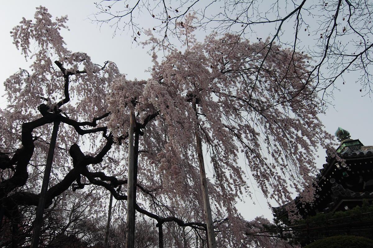 京都 洛西 善峯寺_f0021869_4302475.jpg