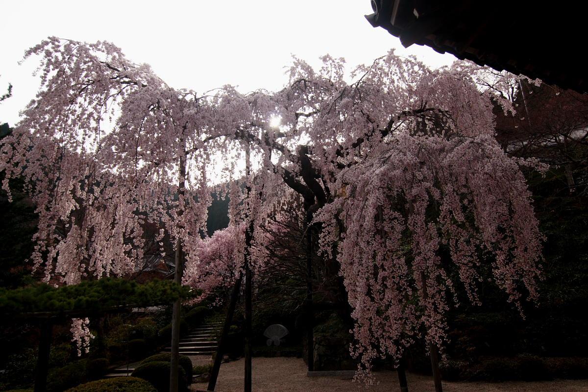 京都 洛西 善峯寺_f0021869_4305891.jpg