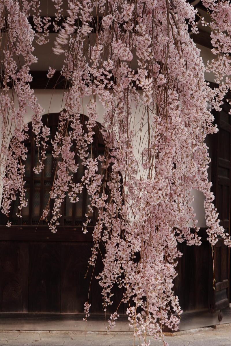 京都 洛西 善峯寺_f0021869_4321947.jpg