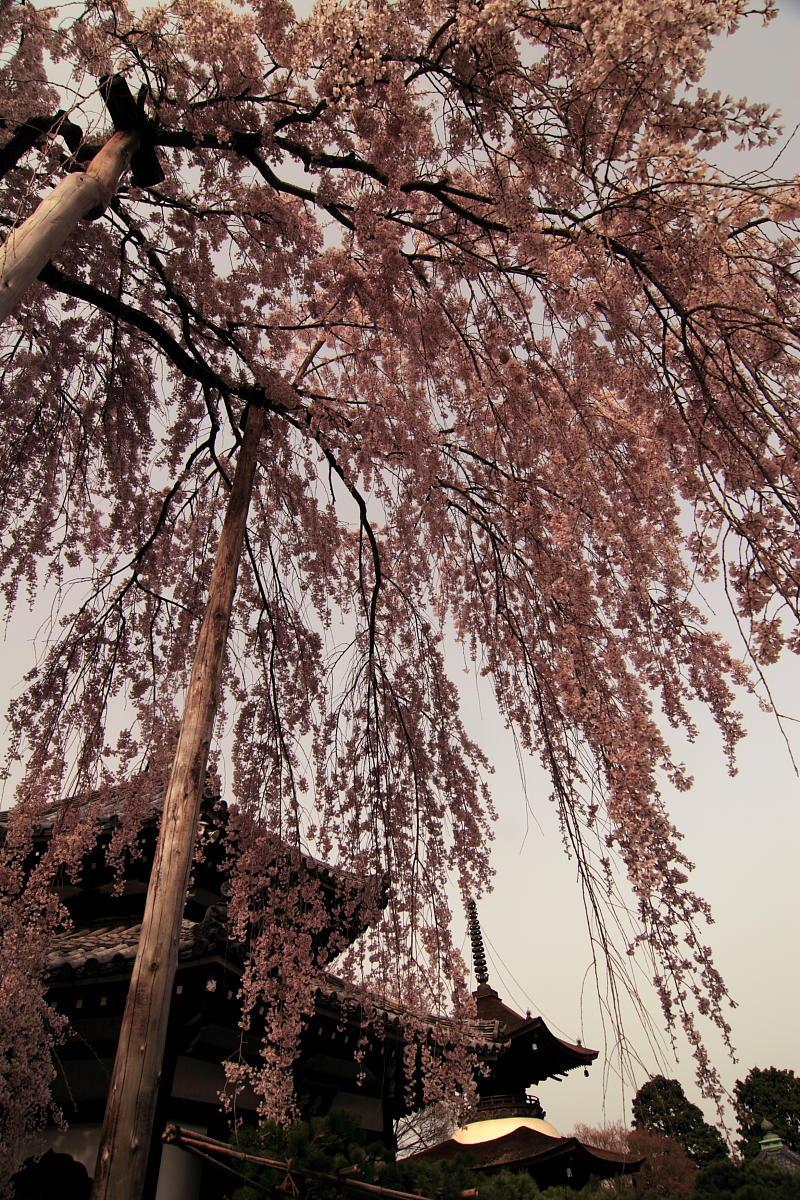 京都 洛西 善峯寺_f0021869_4324279.jpg