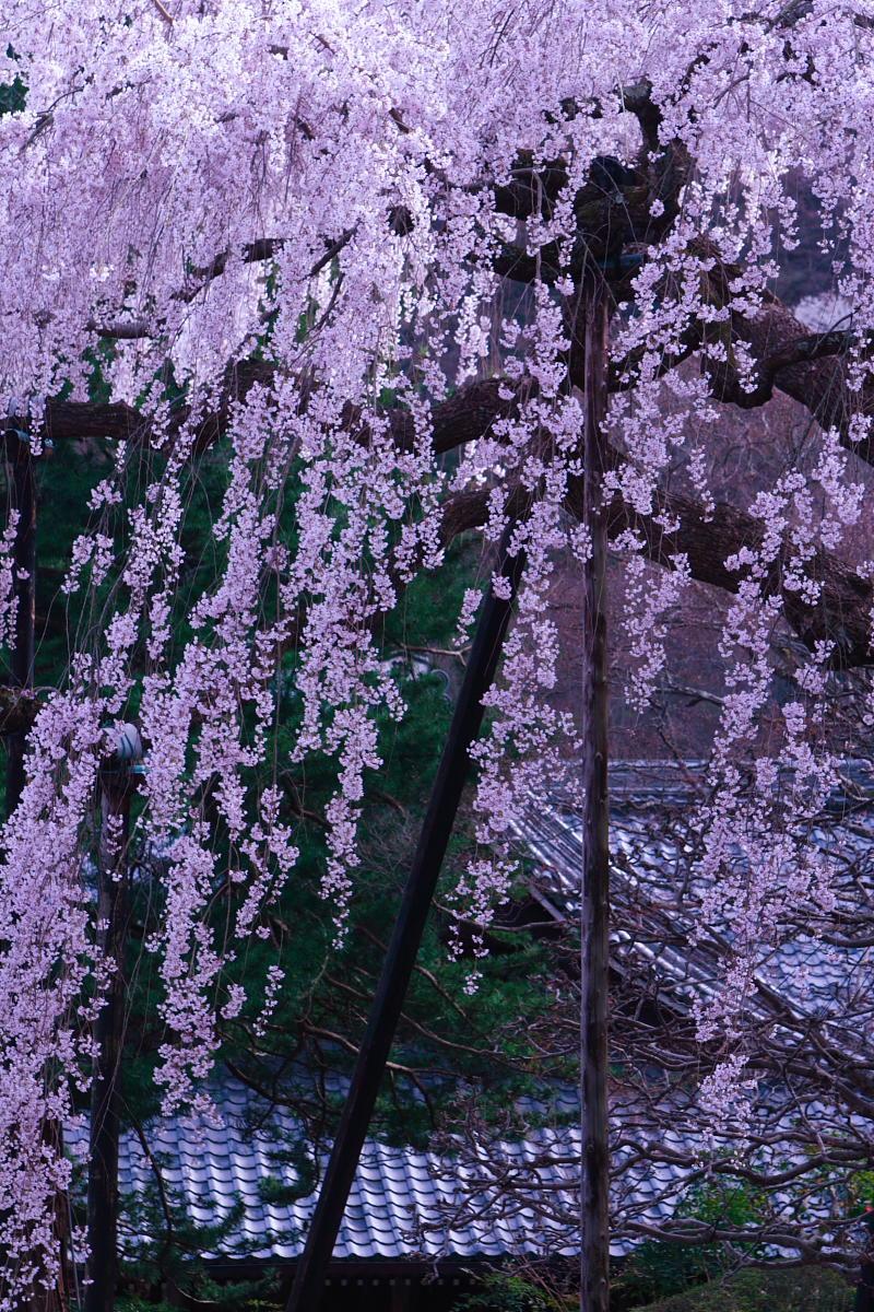 京都 洛西 善峯寺_f0021869_4331992.jpg