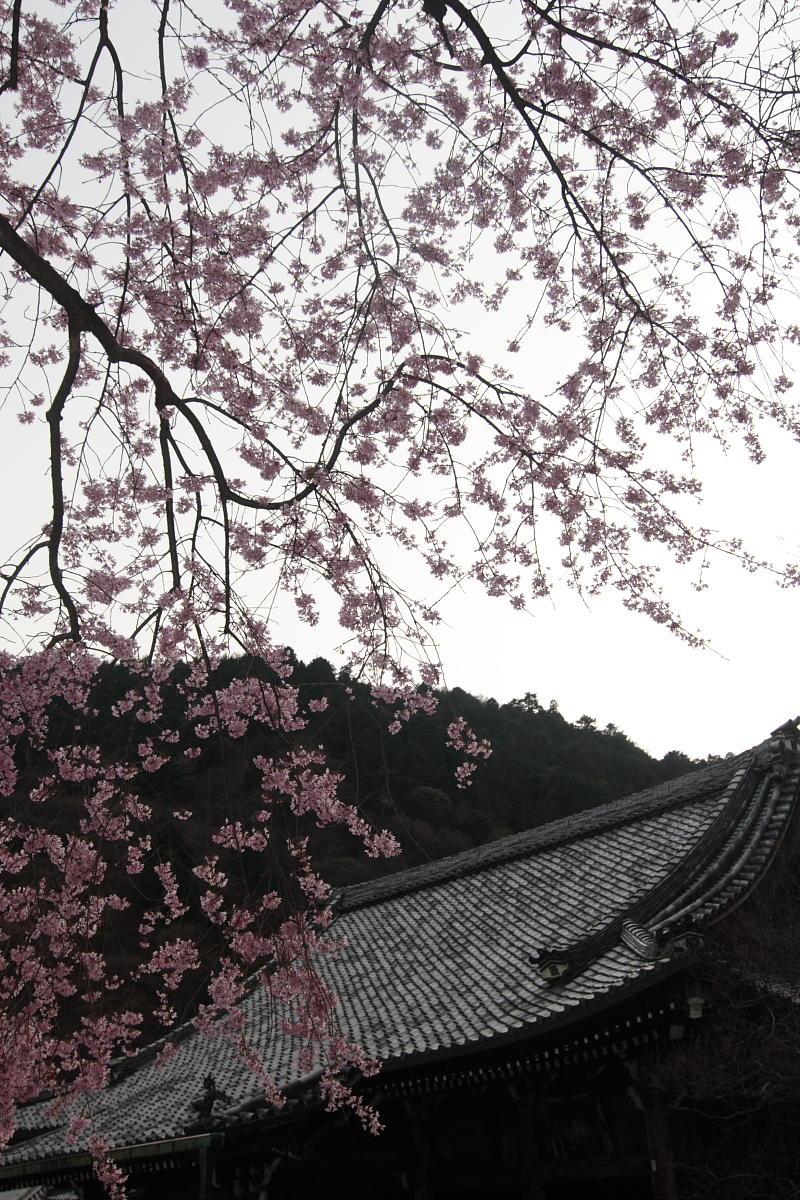 京都 洛西 善峯寺_f0021869_434422.jpg