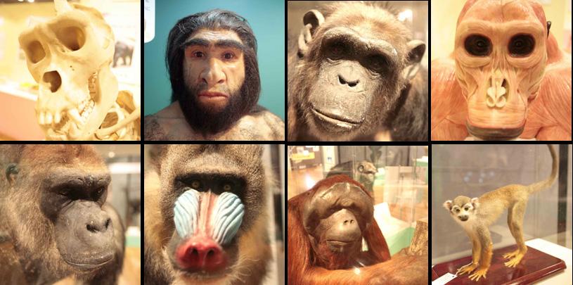4月27日(木)猿の惑星? Reported by Iijima_b0069507_1142476.jpg