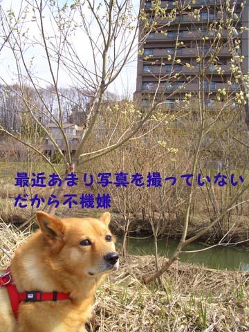 b0019313_201451.jpg
