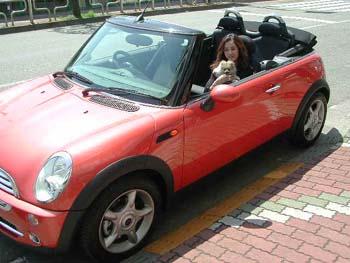 car !!!_e0087043_1352344.jpg